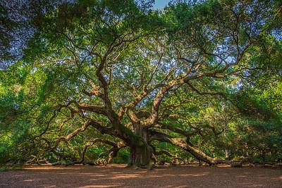 Charleston Landscapes