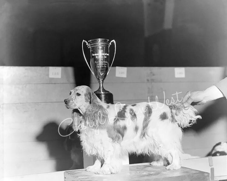 Cocker Spaniel 1932 - 4-WM.jpg