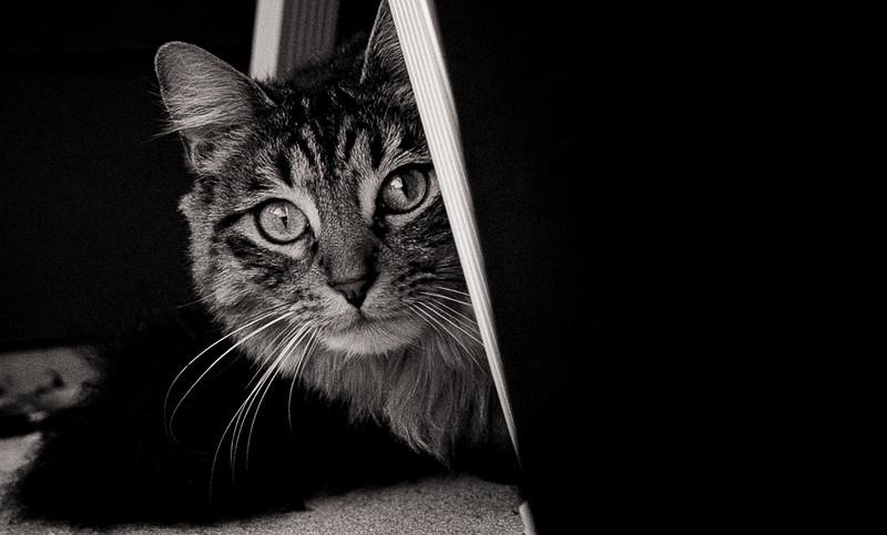 Clem kitty 3-.jpg