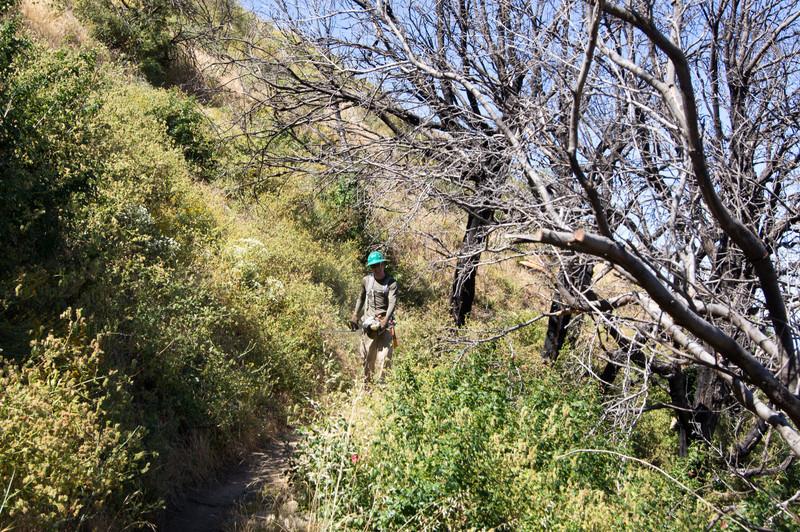 20120630026-Trailwork, MWBA, Sunset Ridge.jpg