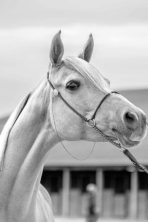 Junior Equestrian Team Show 2019