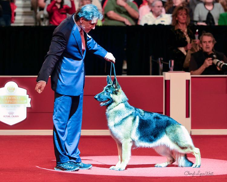 German Shepherd Dog - GCHS CH Breal-Jogra's Isabella CGC