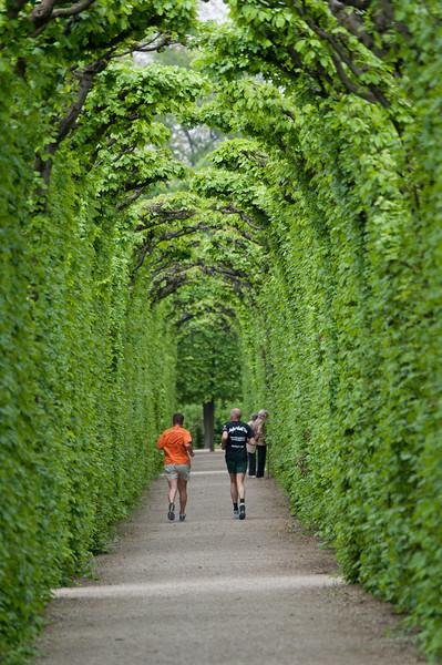 Beautiful pathwalk at the Schonbrunn Garden - Vienna, Austria