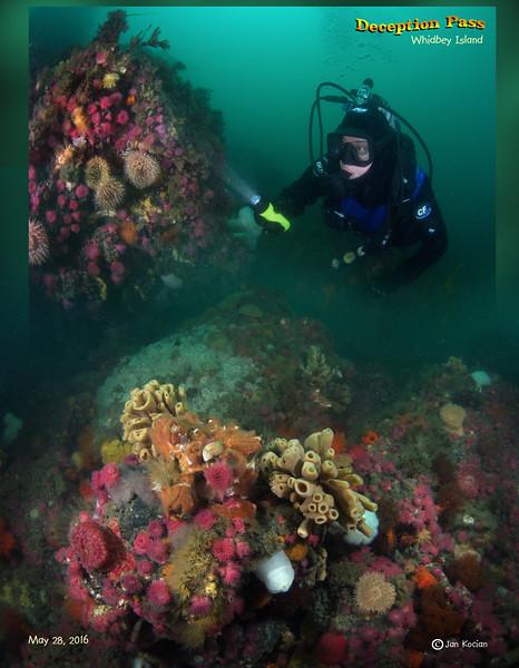 5.28.16 Maya & anemones S .jpg