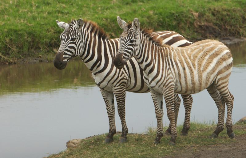 Kenya - 21.jpg