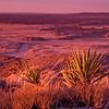 Painted Desert Az
