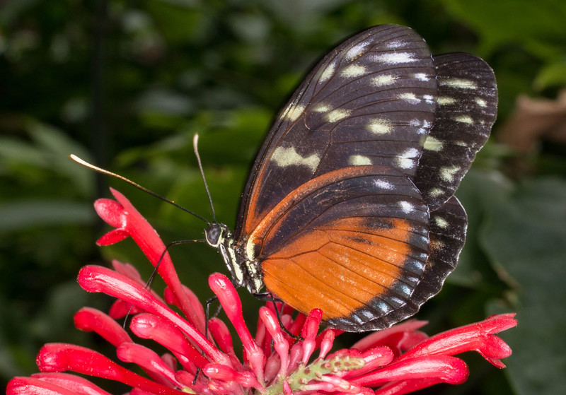 butterfly2_lowres.jpg