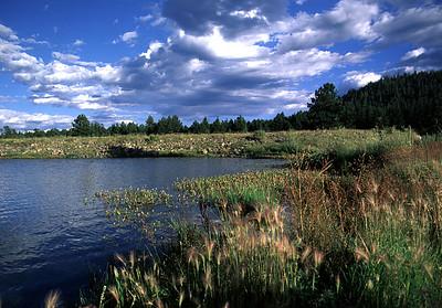 Lakes and Streams