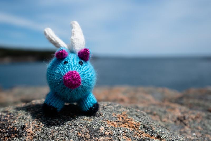 Blue, on the rocks near Ocean Path