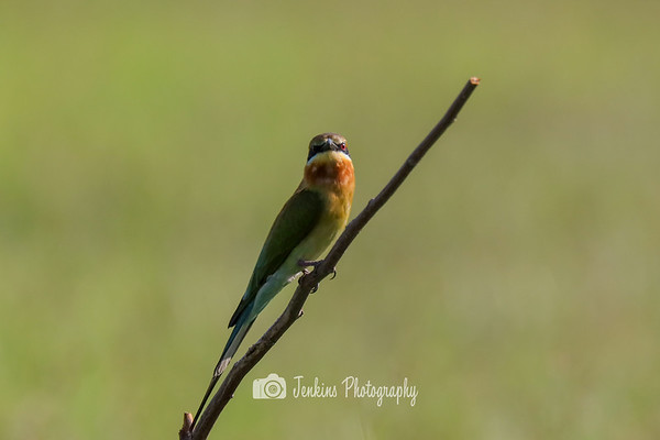 2018-12-28 Bee Eater at Seletar Aerospace