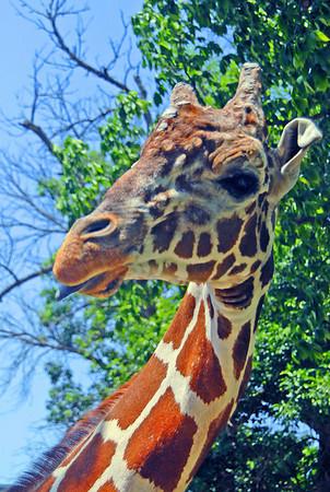 Garden City Zoo