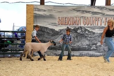 Pee Wee Sheep Showmanship