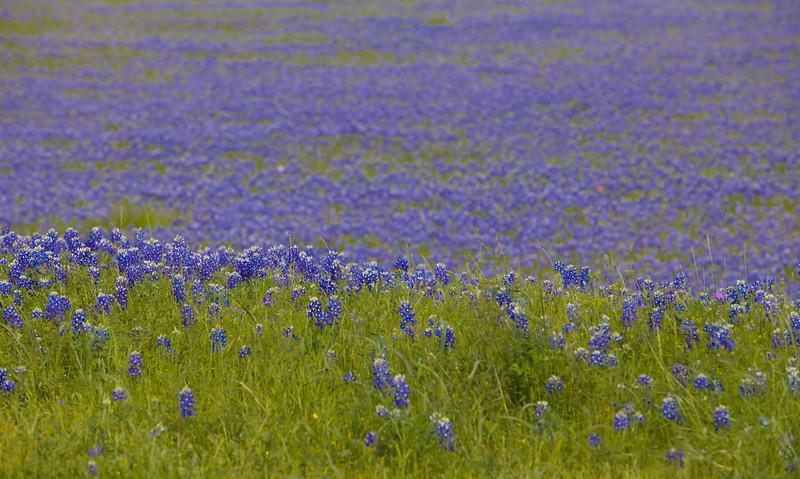 2015_4_3 Texas Wildflowers-7888.jpg