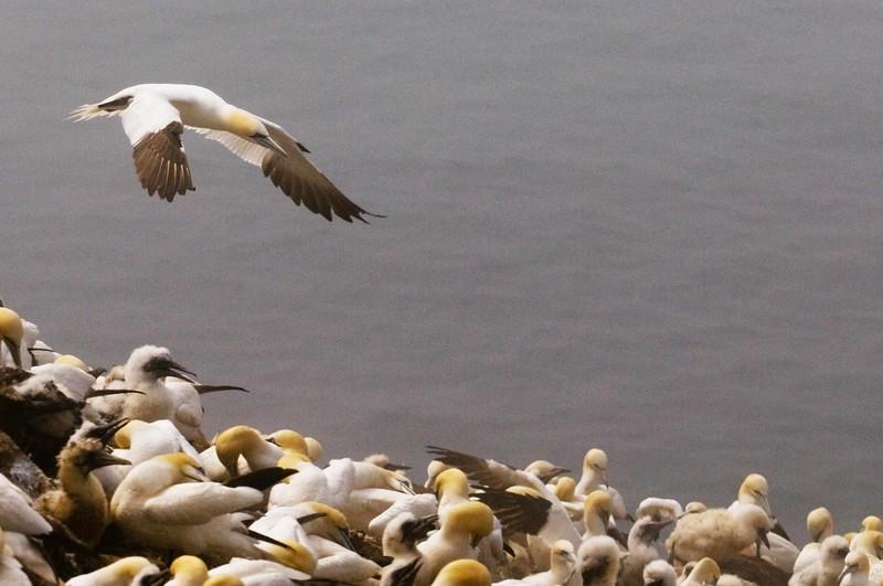 Landing Gannett.jpg