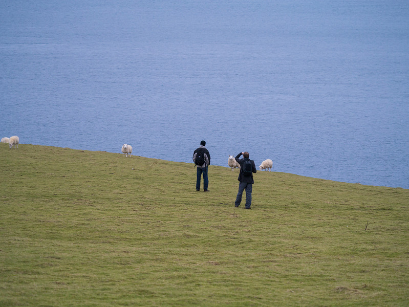 Dan and Tim walking with the Sheep