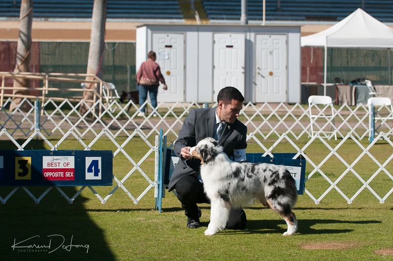 20170205_Australian Shepherds_Lost Dutchman Kennel Club-90.jpg
