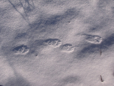 20100121 Wildlife Tracks