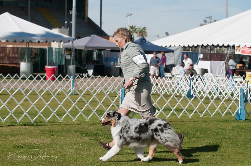 20170205_Australian Shepherds_Lost Dutchman Kennel Club-154.jpg