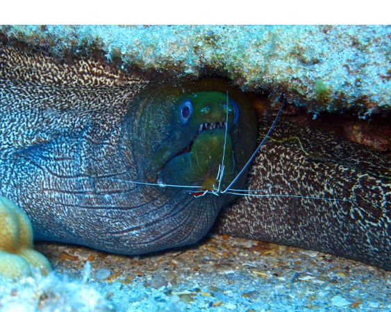 Eel Cleaning.jpg
