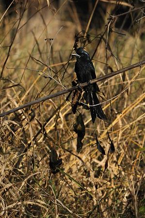 India Birds