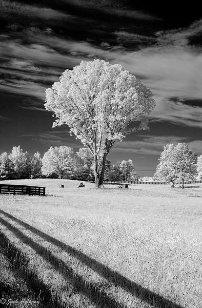 20070712-Tree_3659.jpg