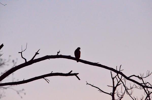 Eagles 022515