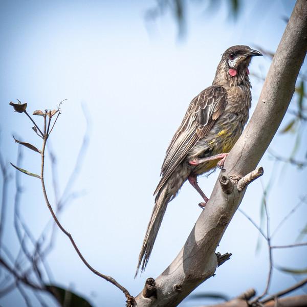 birds  000127.JPG