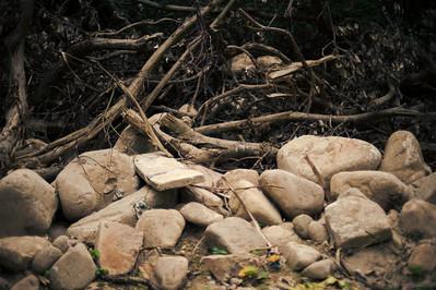 2010-01 Trees in Tai Wan To Beach