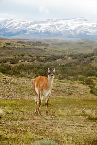 patagonia-1167.jpg