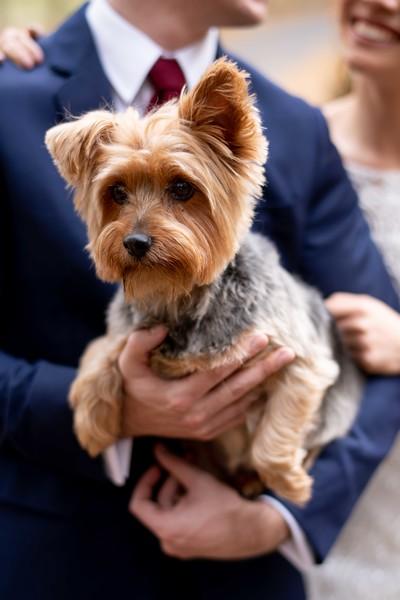 cute-dog-wedding.jpg