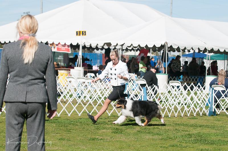 20170205_Australian Shepherds_Lost Dutchman Kennel Club-7.jpg