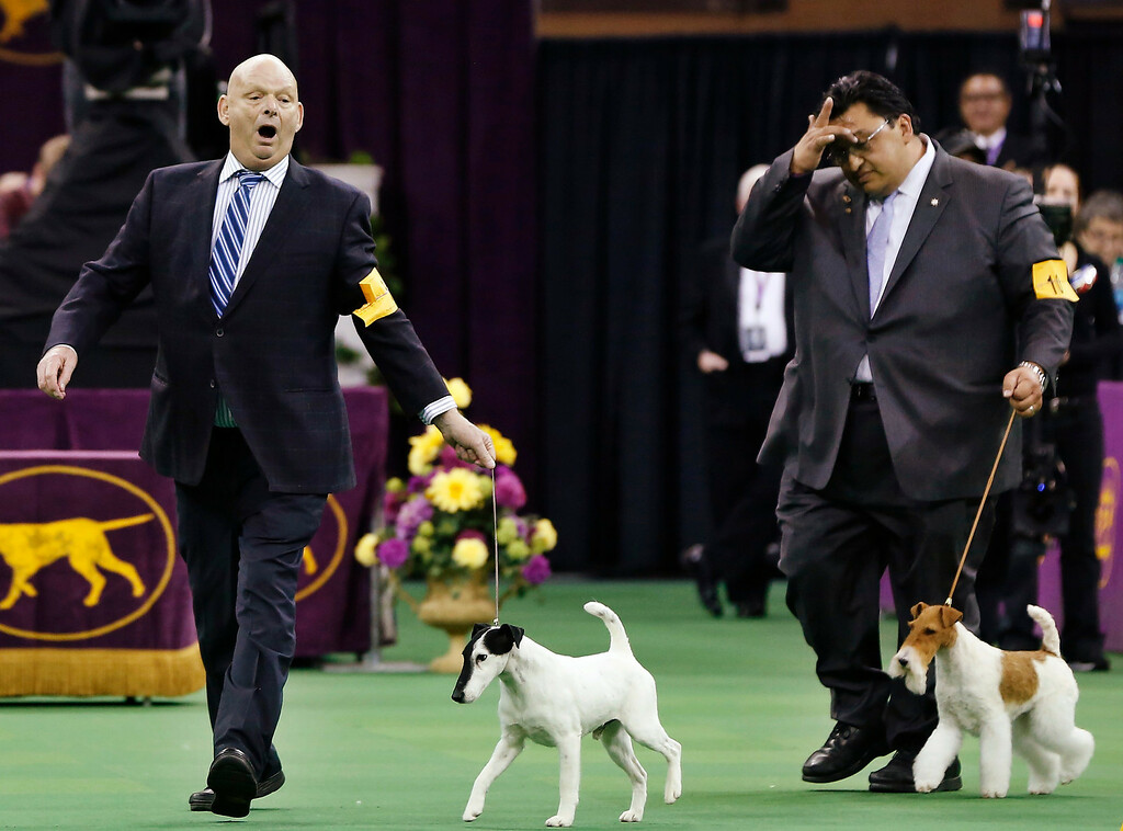 . Handler Eddie Boyes (L) reacts after Adam, a Smooth Fox Terrier, wins the Terrier Group at the 137th Westminster Kennel Club Dog Show at Madison Square Garden in New York, February 12, 2013. REUTERS/Shannon Stapleton