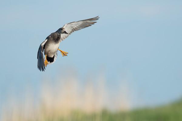 Delta Waterfowl PPR Field Course 2017
