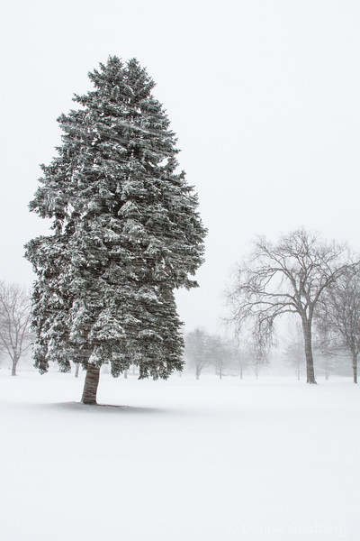 trees collecting snow, snow flying sideways