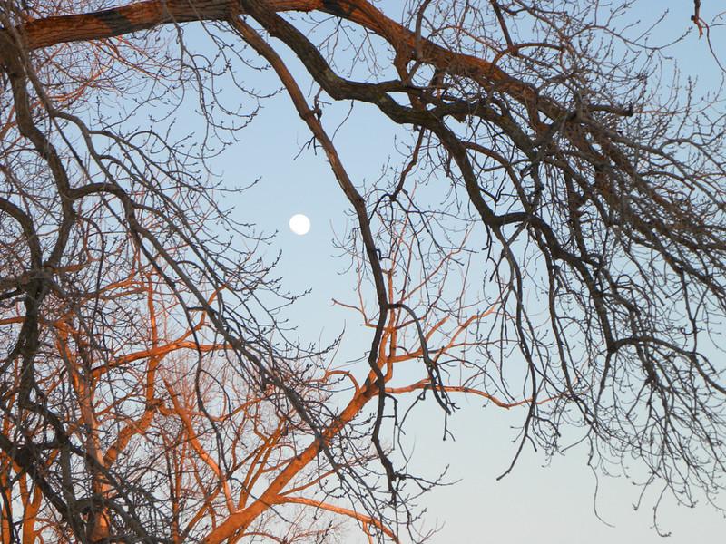 Full Moon - Montezuma