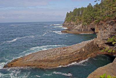 Ocean Front Scenery