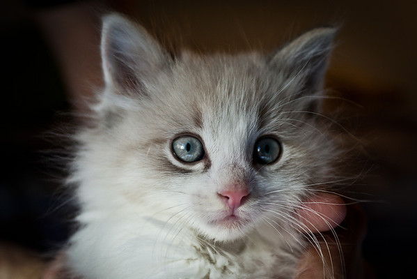 Ansel Kitty