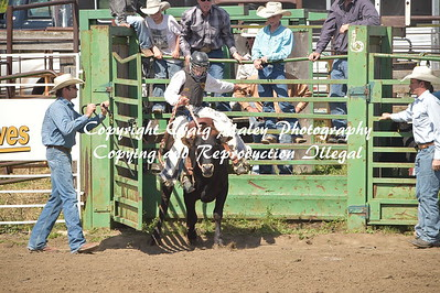 STEER SADDLEBRONC 8-27-2016