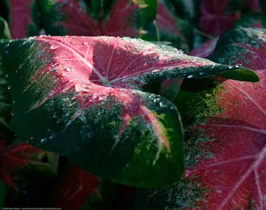 PhotoBlog Leaf Assignment