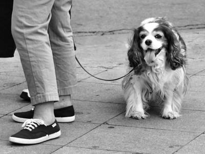 Pessoas com Animais