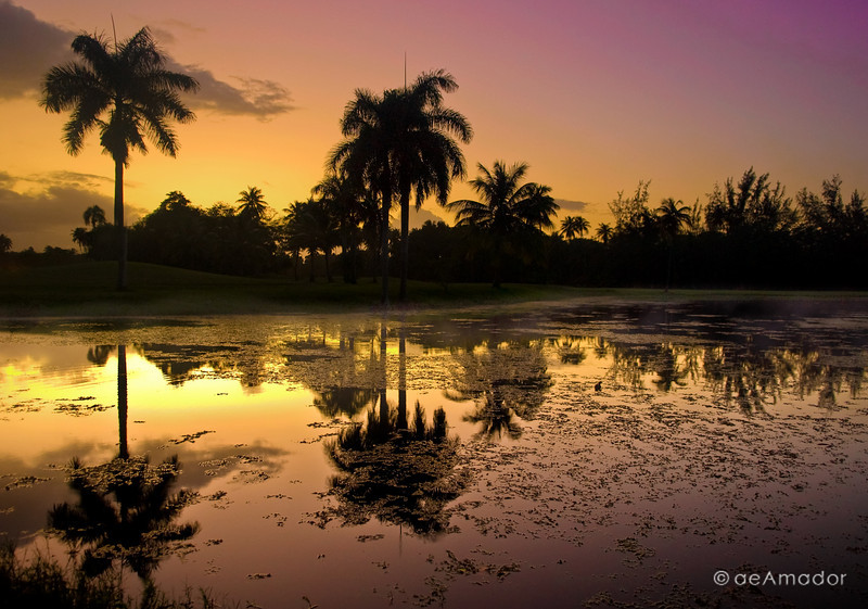 """""""Another Glory Day"""" _DSC0227-Edit-2aeamador©-DorMon1"""