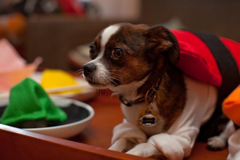 Dog-sushi-halloween2-5.jpg