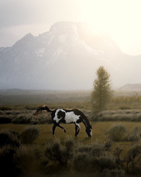 Paint Horse in the Tetons