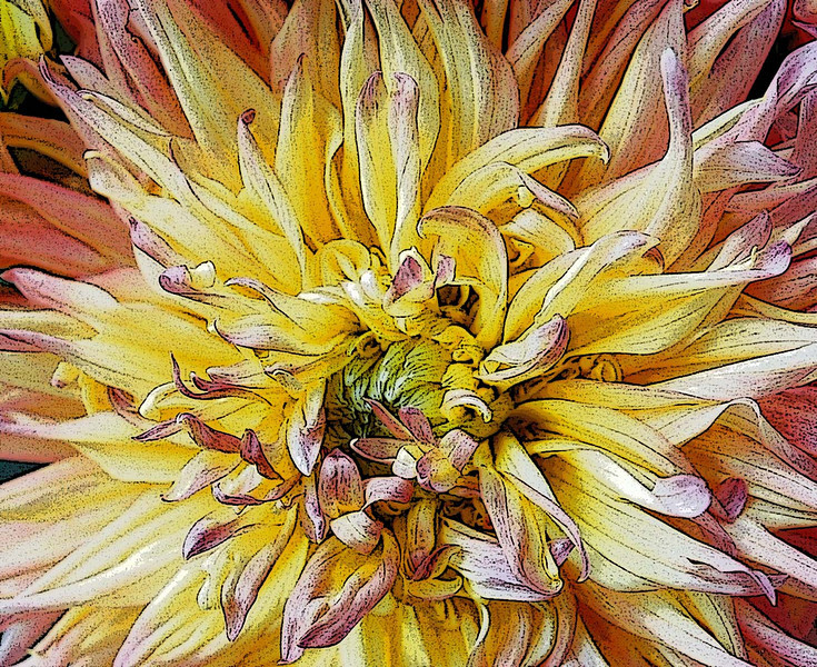 Artistic filters applied to an image of a chrysanthemum.