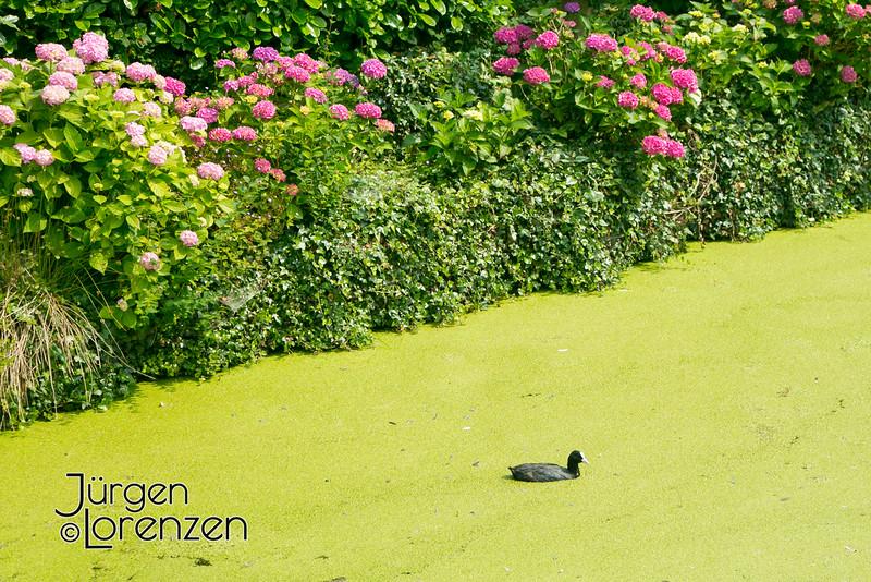 2013Europe_Holland_0469.jpg