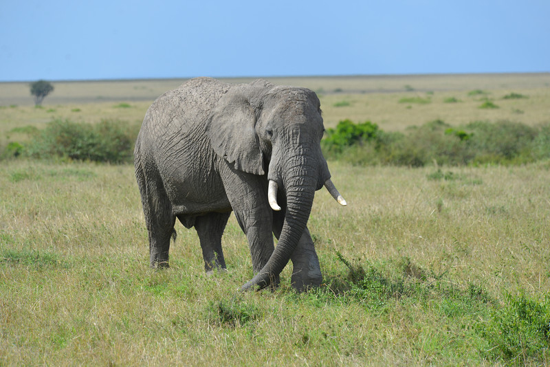 East Africa Safari 239.jpg