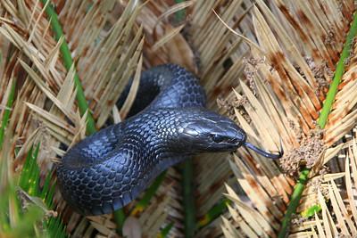 Lizards & Snakes