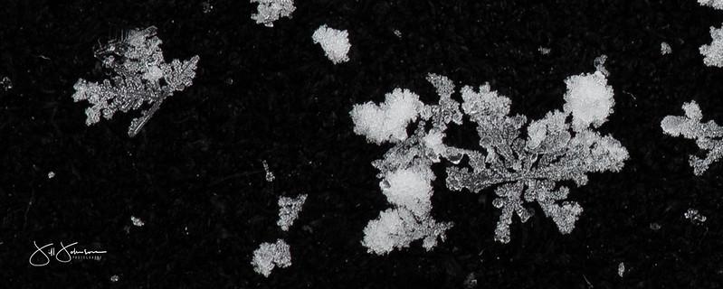 snowflakes-0789.jpg