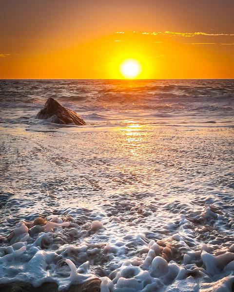 Coastal_Tribolet-78.jpg
