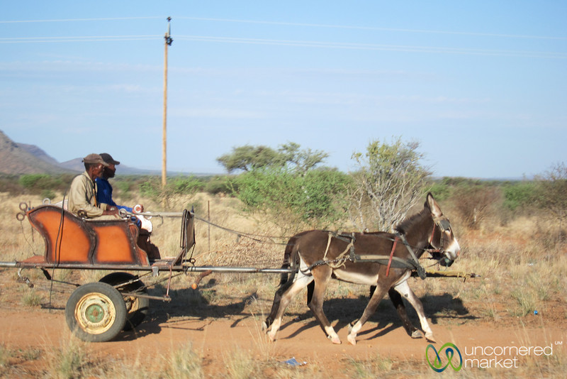 Nambian Men With a Donkey Cart
